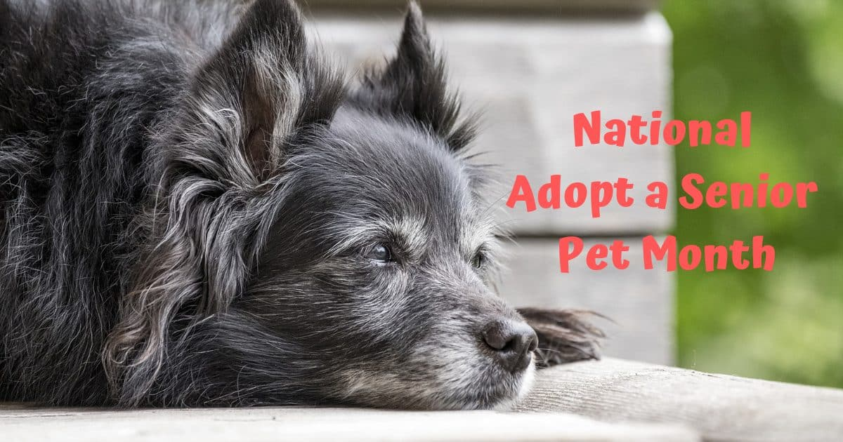 National adopt a senior pet month