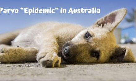 "Parvo ""Epidemic"" in Australia"