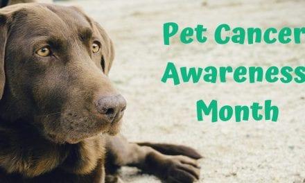 Pet Cancer Awareness Month – November