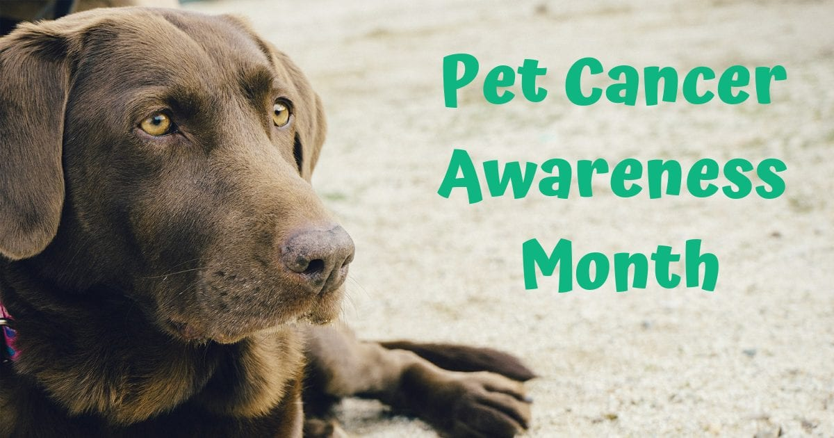 Pet Cancer Awareness Month – November