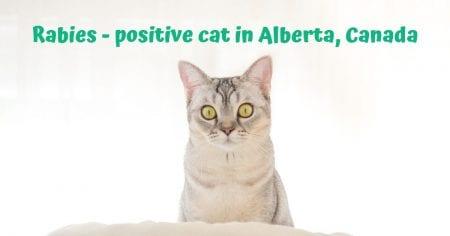 Rabies – positive cat in Alberta, Canada