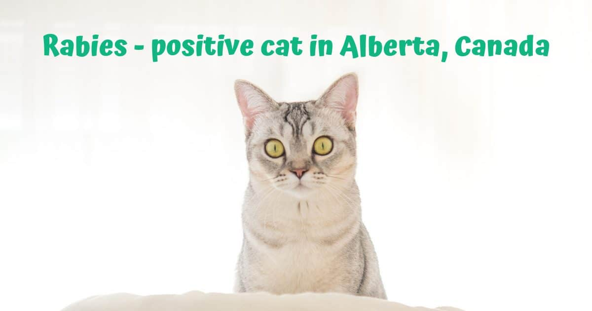 Rabies – positive cat in Alberta, Canada