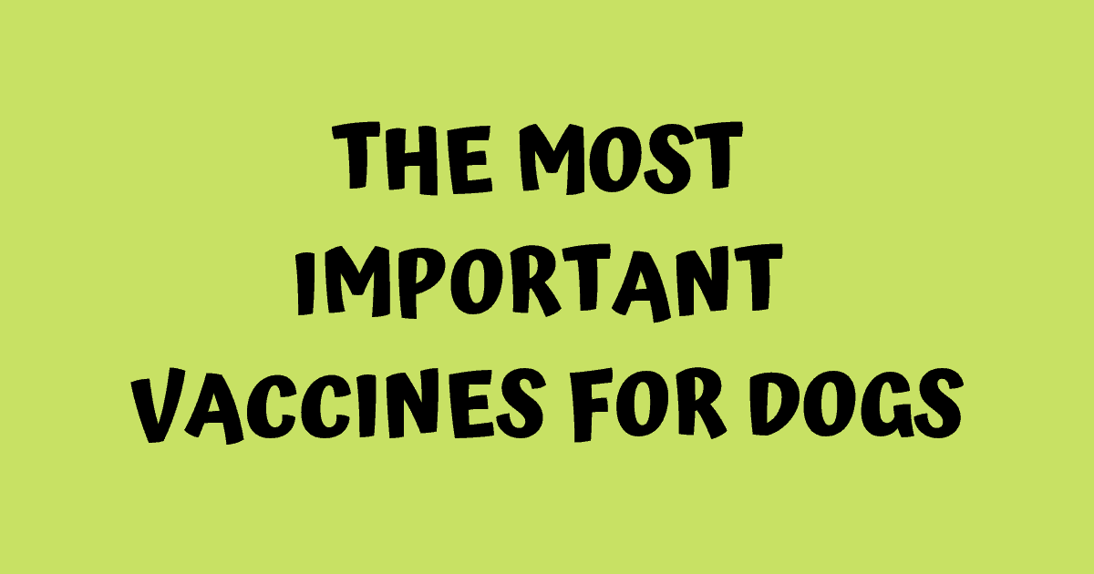 The most important vaccines for dogs