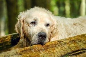 National adopt a senior pet month