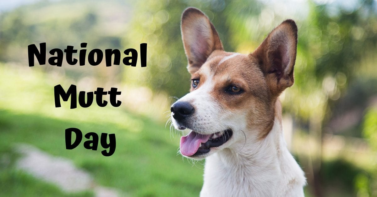 National Mutt Day – 02.12