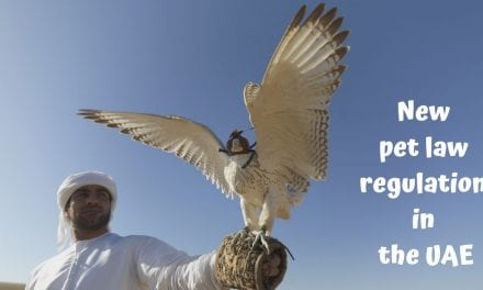 New pet law regulation in the UAE