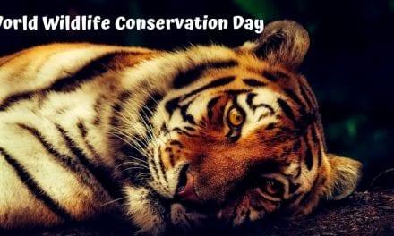 World Wildlife Conservation Day – 04.12