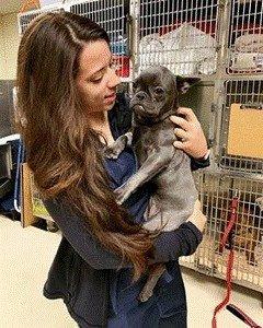 Becoming A Veterinary Technician