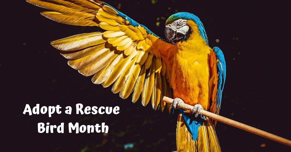 Adopt a rescue bird month – January