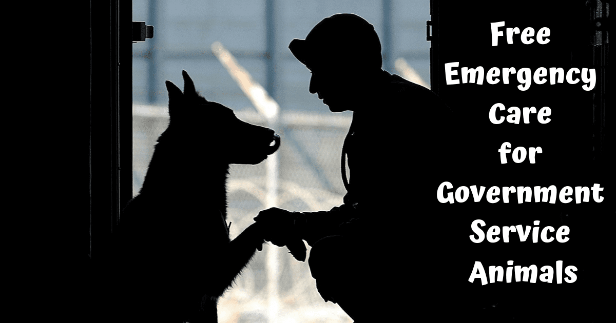 Free Emergency Care for Government Service Animals