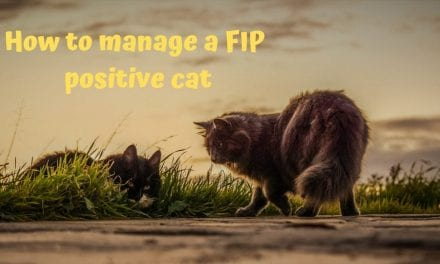 How to Manage a FIP Positive Cat