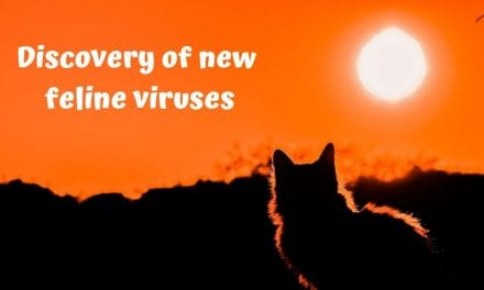 Discovery of new feline viruses