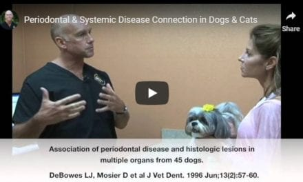 Periodontal and Systemic Disease Connection in Dogs & Cats – Video by Dr. Brett Beckman
