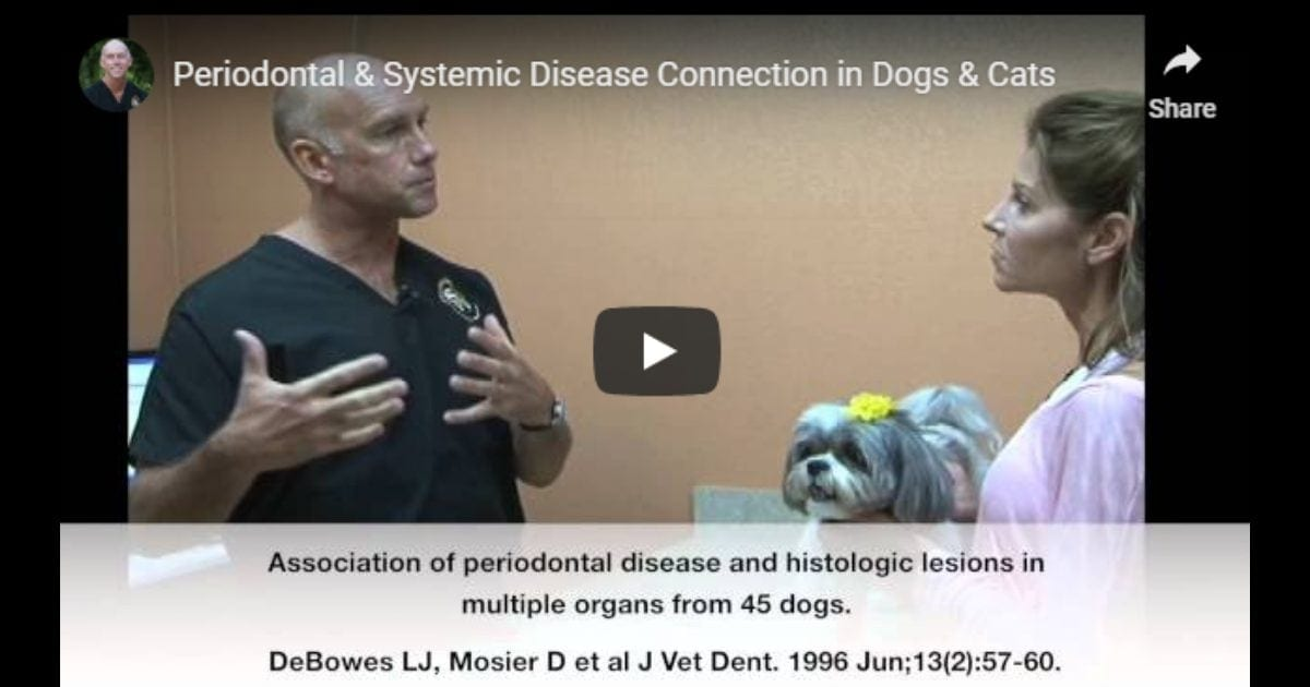 Periodontal & Systemic Disease Connection in Dogs & Cats