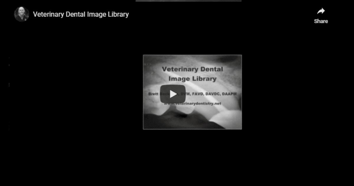 Veterinary Dental Image Library – Video by Dr. Brett Beckman
