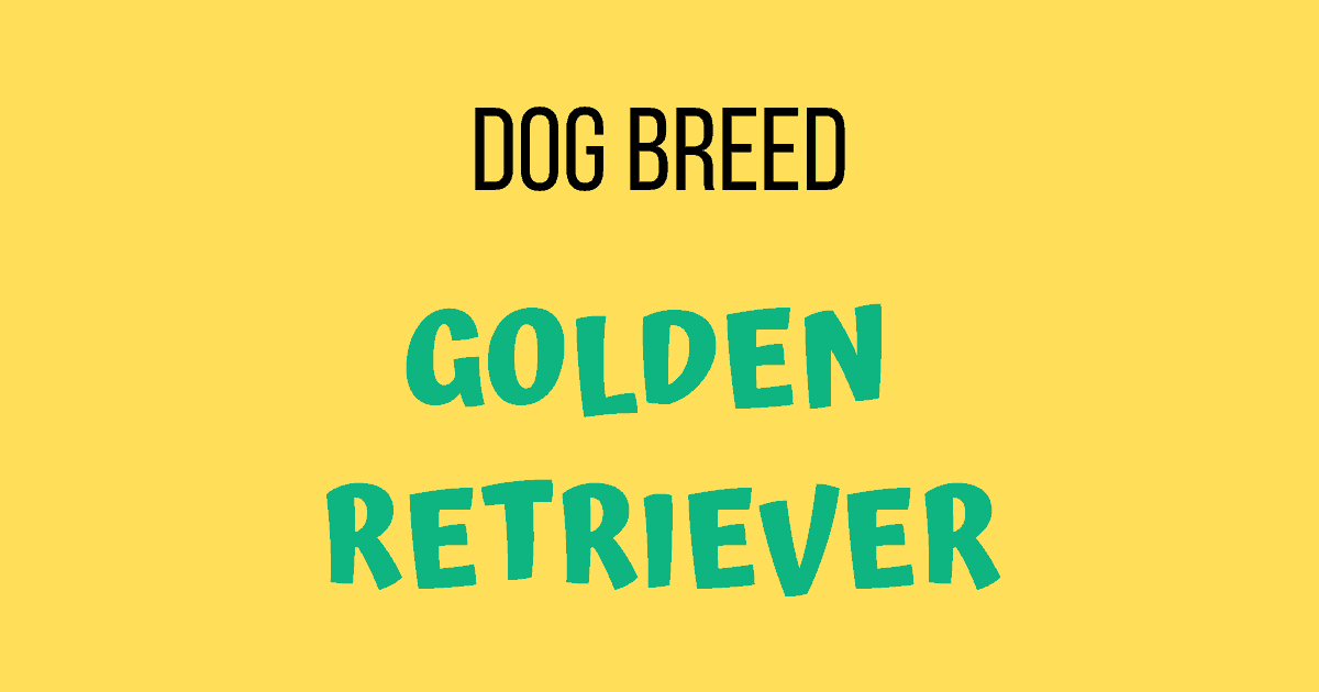 Dog Breed: Golden Retriever