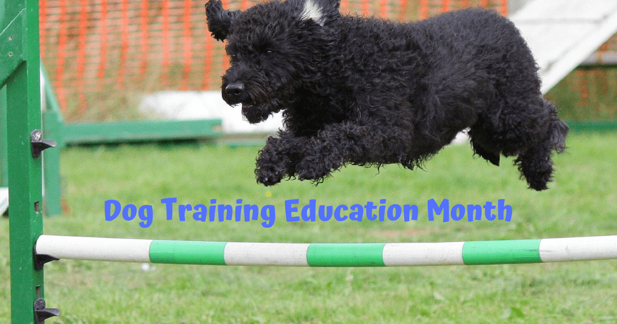 Dog Training Education Month – February 2019