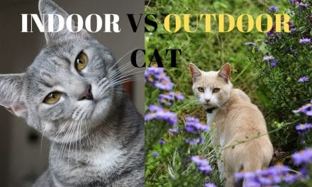Indoor Vs Outdoor Cats (pros and cons)