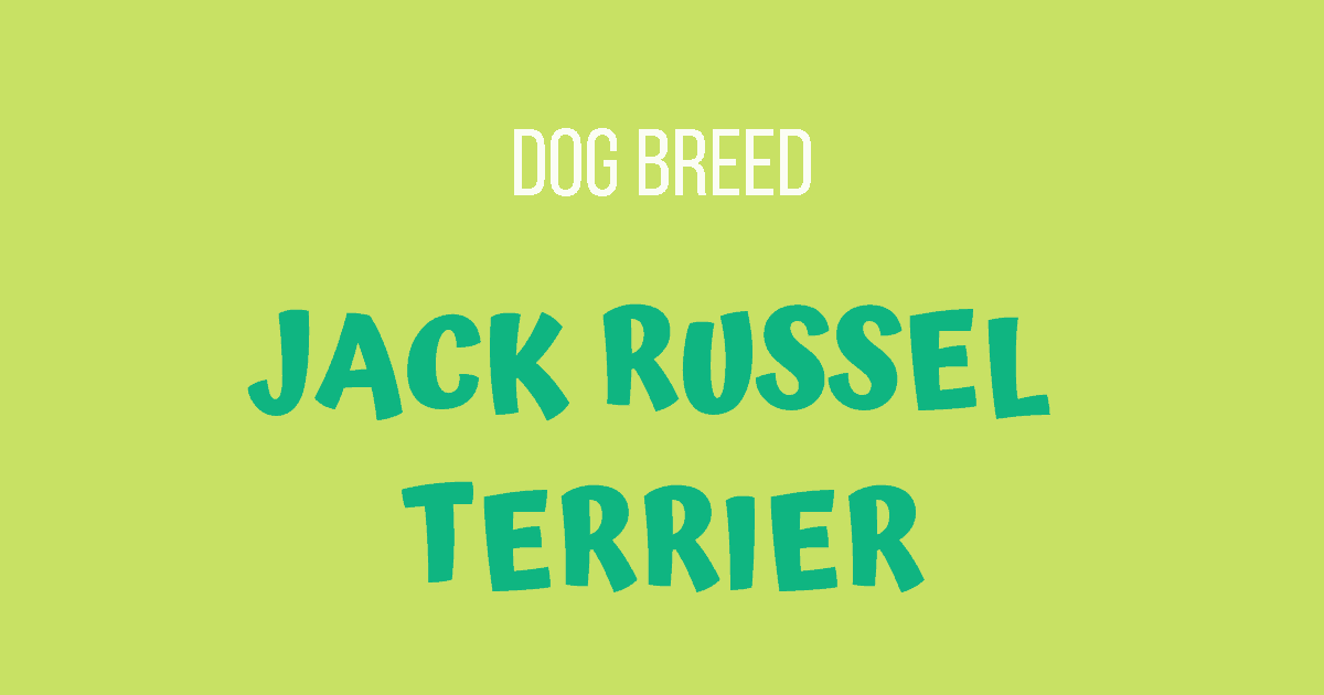 Dog Breed: Jack Russel Terrier
