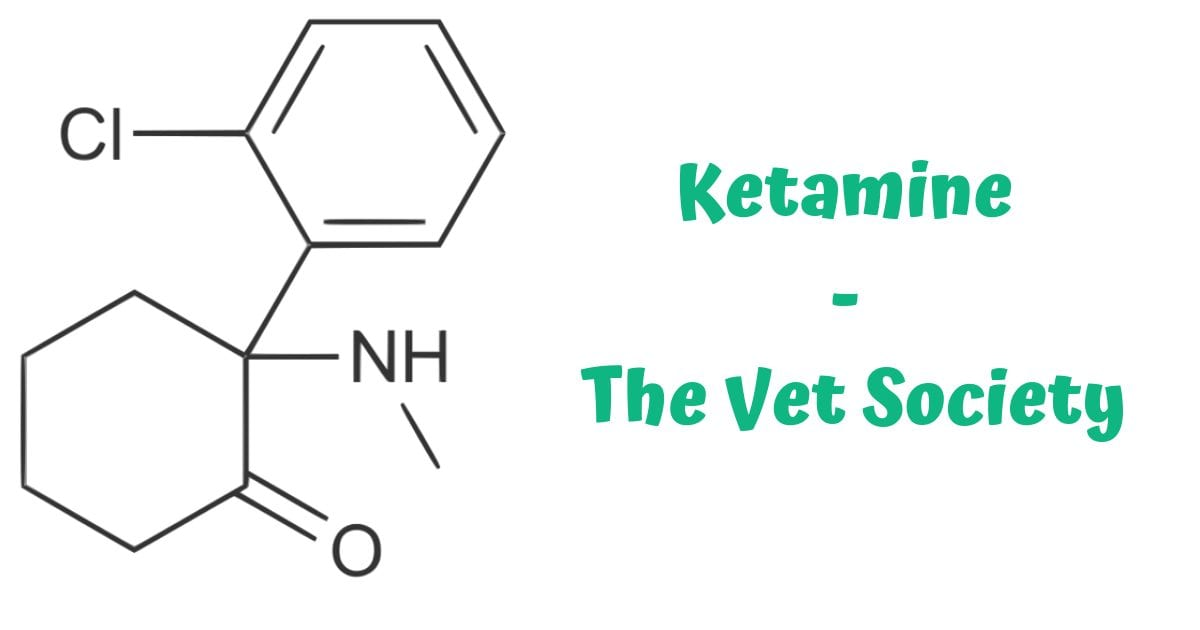 Ketamine – The Vet Society