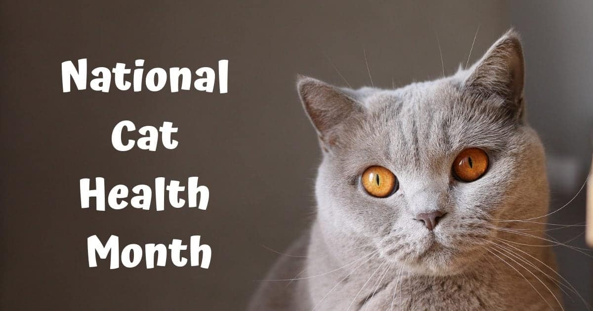 National Cat Health Month – February 2019