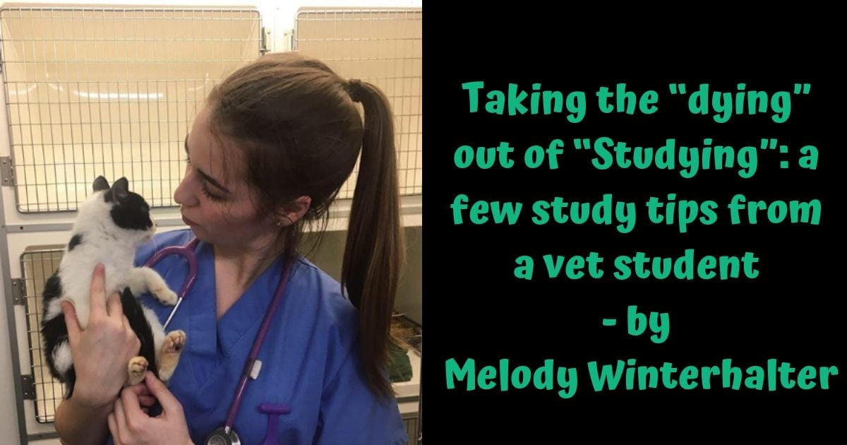 Melody The Vet