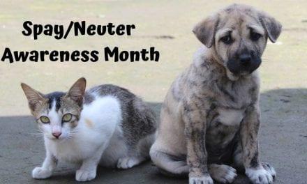 Spay/Neuter Awareness Month