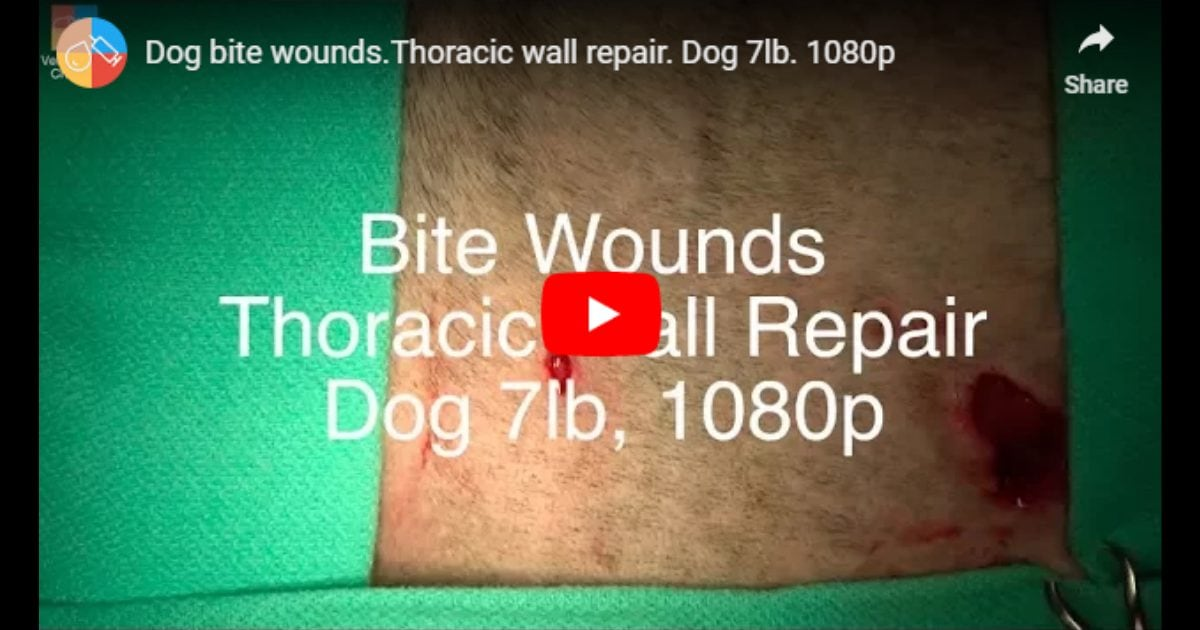 Thoracic wall repair – Video by Vet Surgery Channel