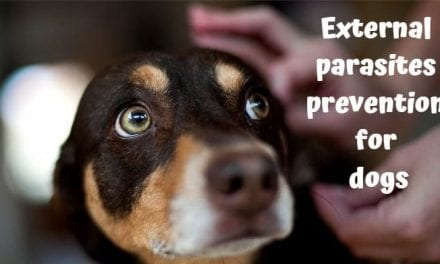External parasites prevention for dogs