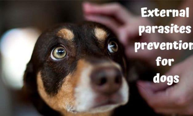 External parasites prevention for dogs
