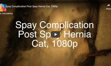 Spay Complications – Video by Vet Surgery Channel