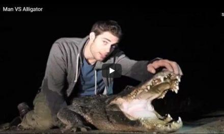 Man vs. Aligator – Video by Dr. Evan Antin