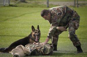 military dog training