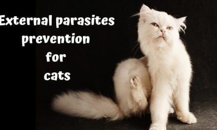 External parasites prevention for cats