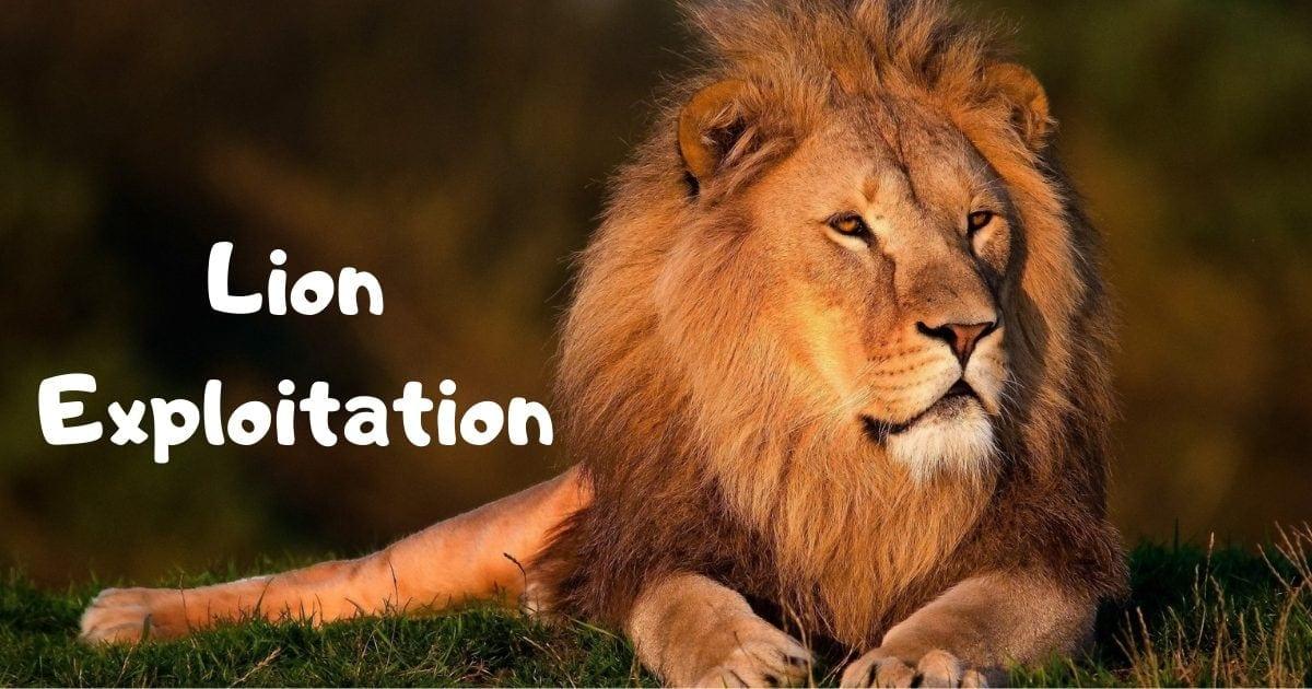Lion Exploitation