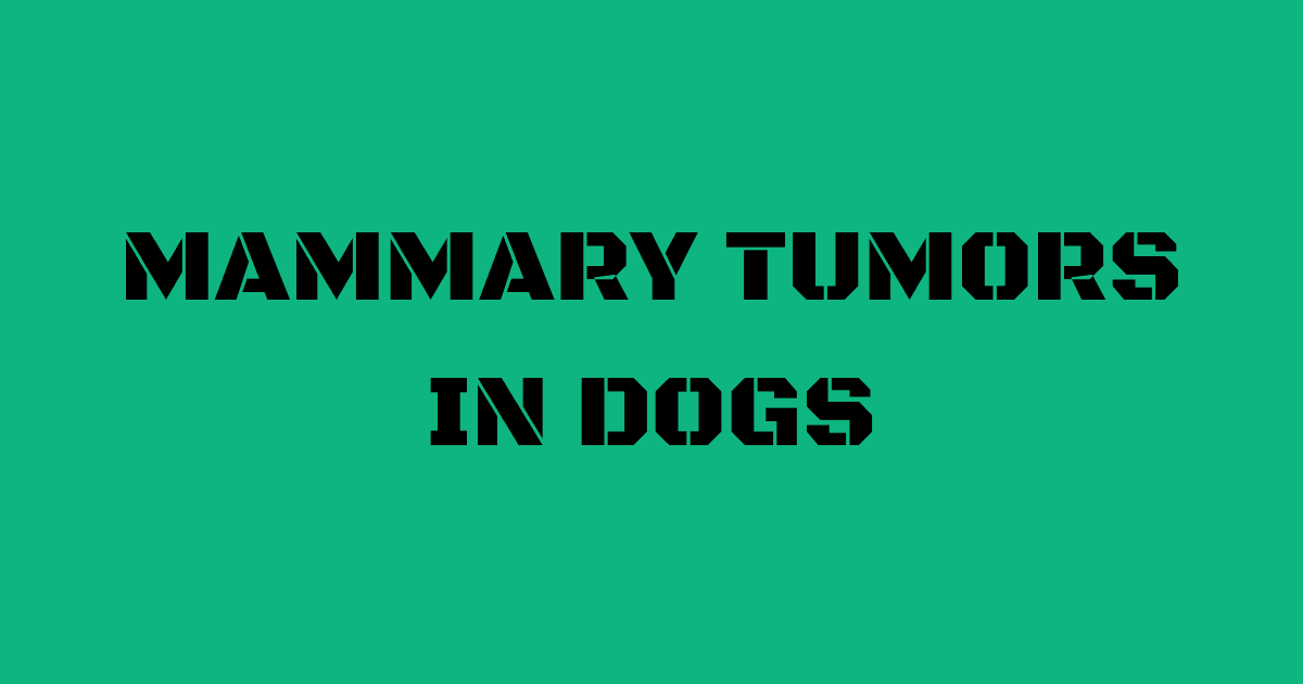 Dog Mammary Tumor Pictures