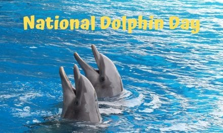 National Dolphin Day – April 14 2019