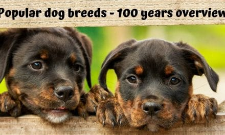 Popular dog breeds – 100 years overview