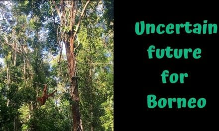 Uncertain future for Borneo