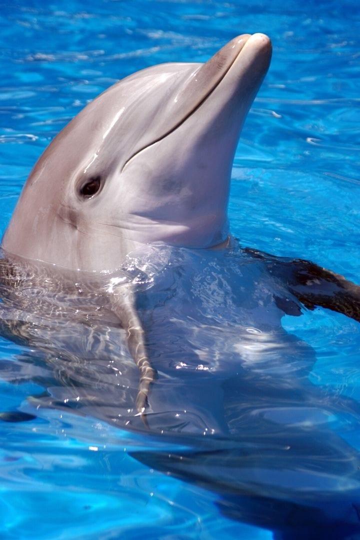 National Dolphin Day, I Love Veterinary