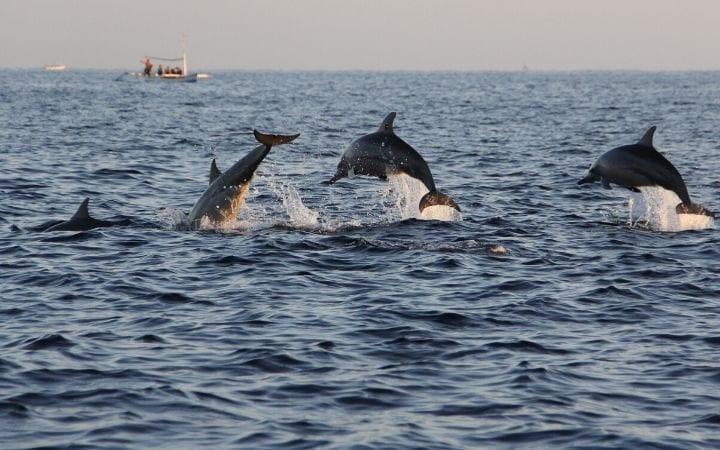 dolphins swimming I Love Veterinary