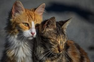 two cats looking sad