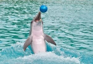 dolpjin playing with a ball
