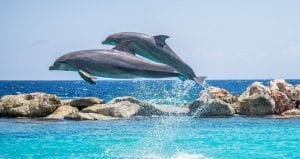 two dolphins jump, national dolphin day, I love Veterinary