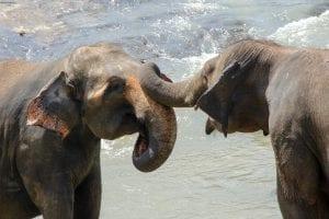 The Human Elephant Learning Program