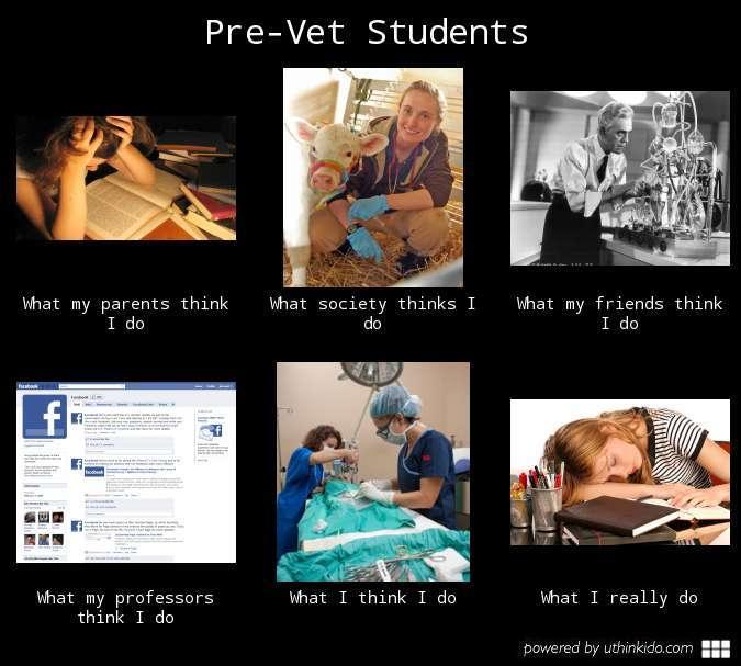 Pre-vet expectations vs reality