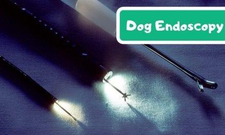 Dog endoscopy