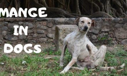 Mange in Dogs