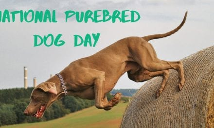 National Purebred Dog Day – May 1