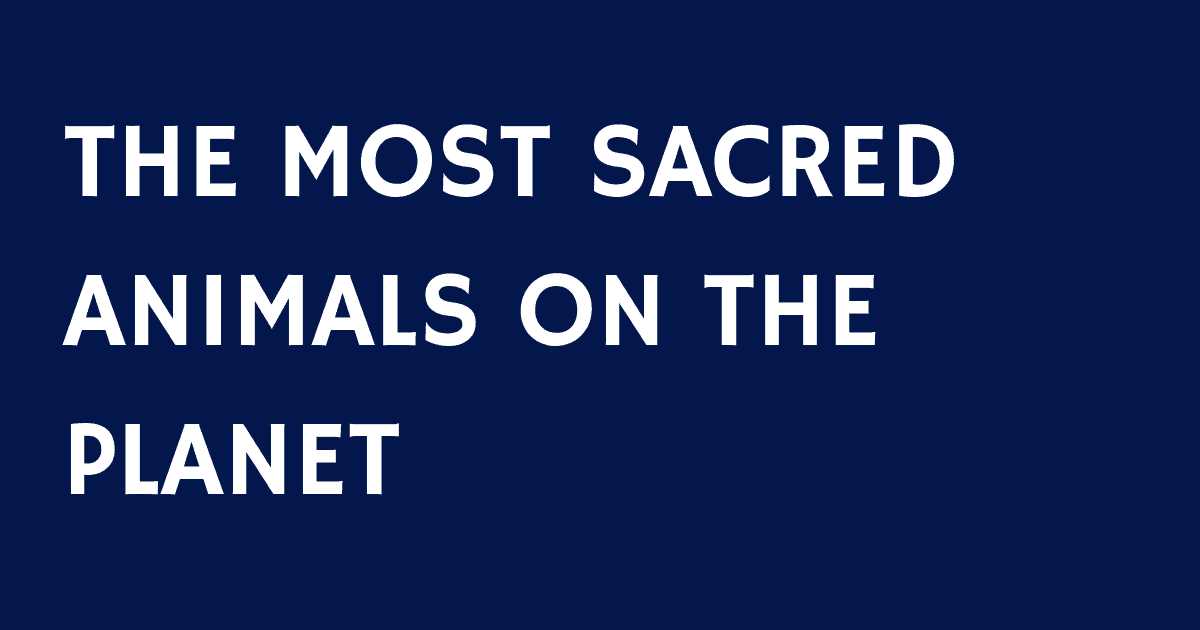 THE MOST SACRED ANIMALS ON THE PLANET